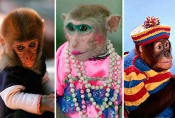 Фото обезьянки в женском платье